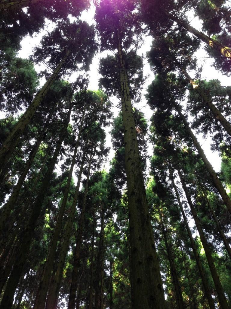 ウッドロードの森