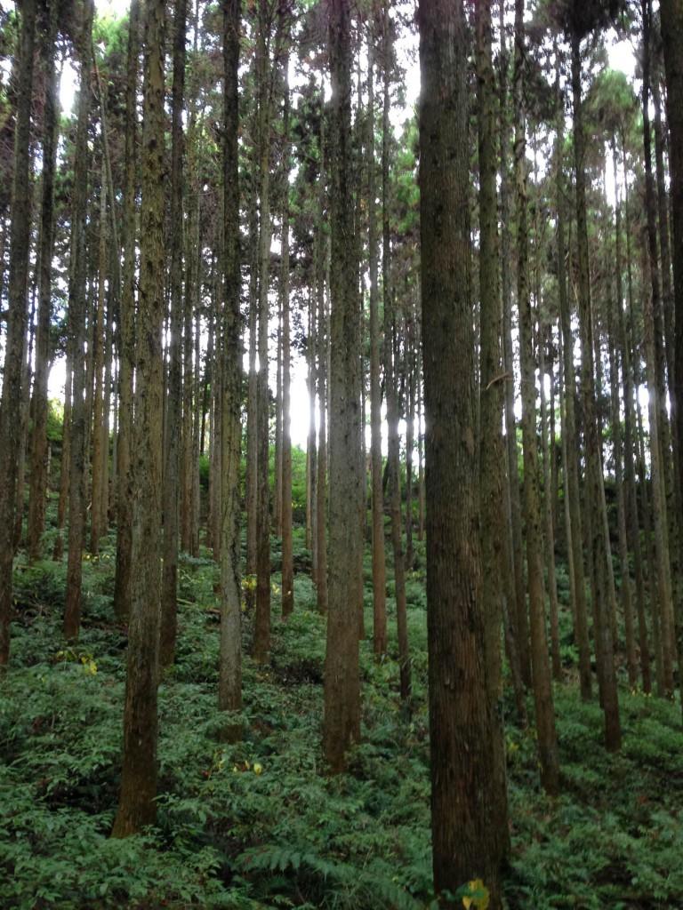 ウッドロード 杉の森