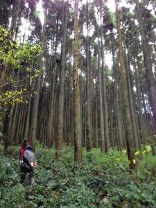 杉の森 ウッドロード